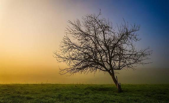 Thomas Christoph - tree