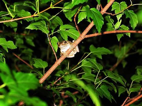 Tree Toad by Tamara Stickler