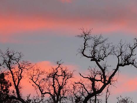 Tree tops  by Debra Madonna