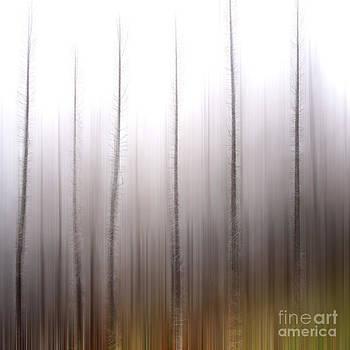 BERNARD JAUBERT - Tree trunks