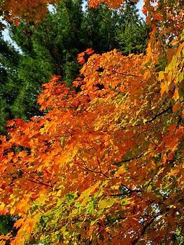 Tree Waltz by Anne Sterling
