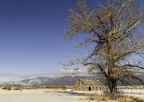 Tree with Barn by Sue Smith