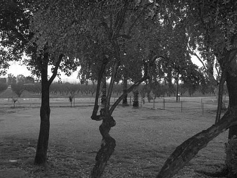 Tree With No color by Franshisca Delgado