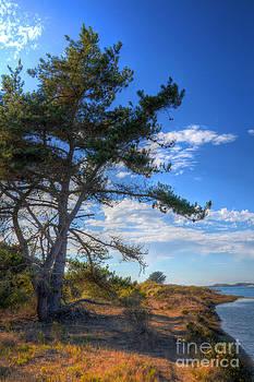 Treebay by Matthew Hesser