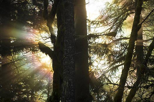 Treelight by Daryl Hanauer