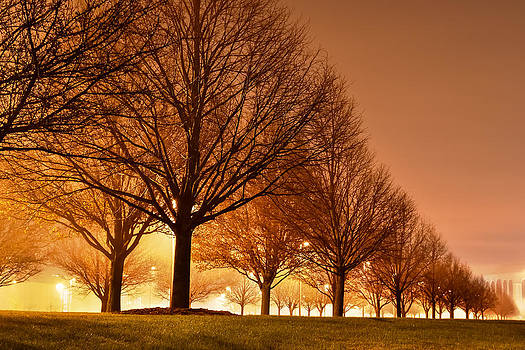 Trees all a glow by Robert Painter