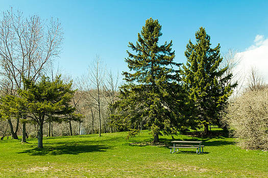 Trees and benches. by Tibor Co