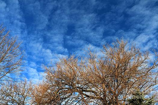Trees and Clouds by Jay Nodianos