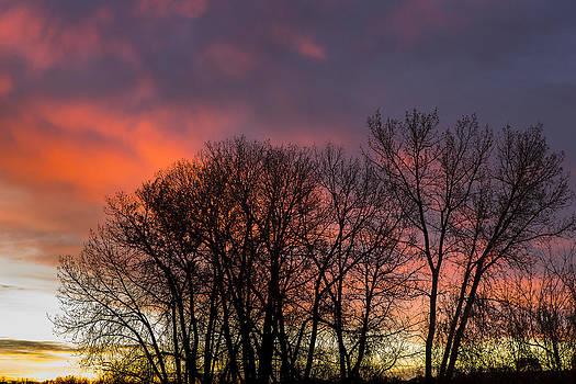 Tim Grams - Trees at Sunrise