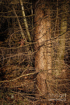 Nick  Biemans - Trees in a dark forest