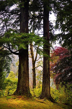 Jenny Rainbow - Trees in Autumn Glory. Scotland