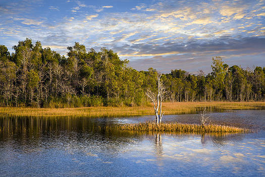 Debra and Dave Vanderlaan - Trees in the Everglades