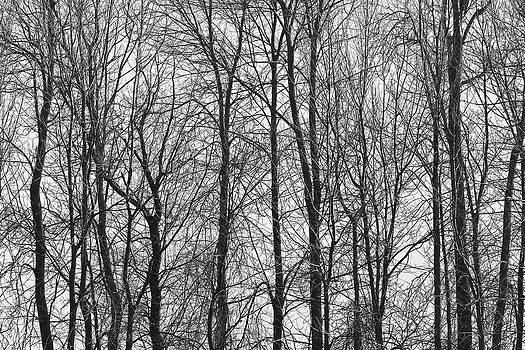 Trees by Jim Nelson
