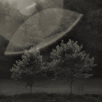 Trees by M S B