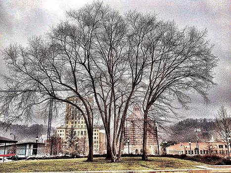 Trees  by Mark Block