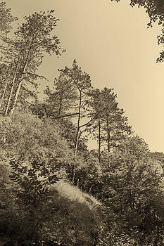 Trees on a hillside by Peter Fodor