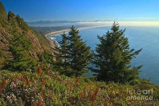 Adam Jewell - Trees On The Cliffs