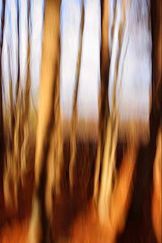 Trees by Rebecca Skinner
