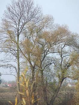 Trees by Stephan Kubancsik
