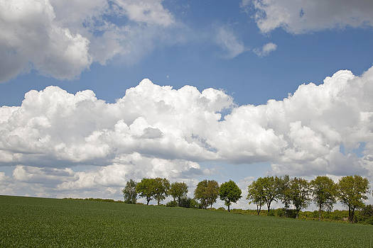 Trees under clouds by Frits Selier