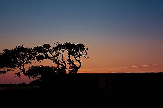 Regina  Williams  - Treescape