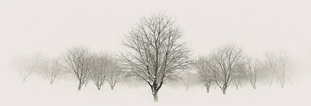 Treeternity by Jim Speth