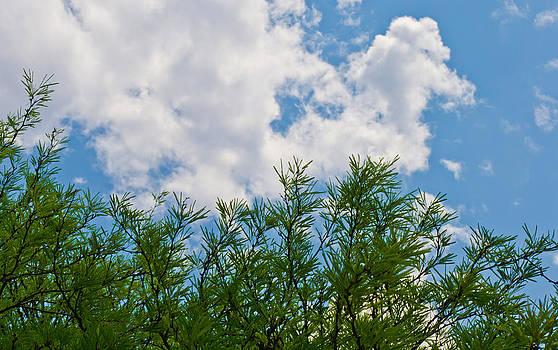 Treetop View by Philip Chiu