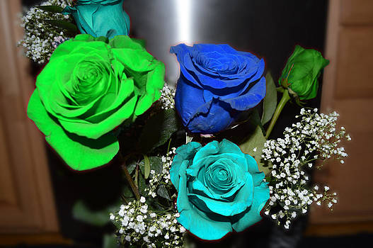 Tri-Colored Roses by Alexis Retter