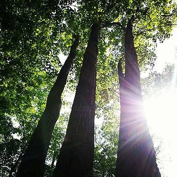 Trinity of Trees by Sacred  Muse