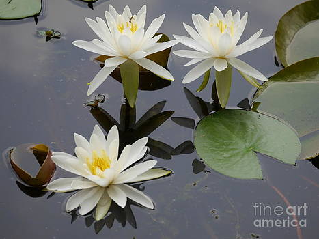 Trio of Lilies by Jane Ford
