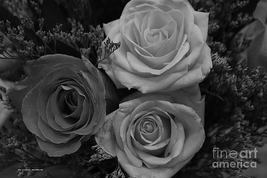 Tannis  Baldwin - Trio of roses BW