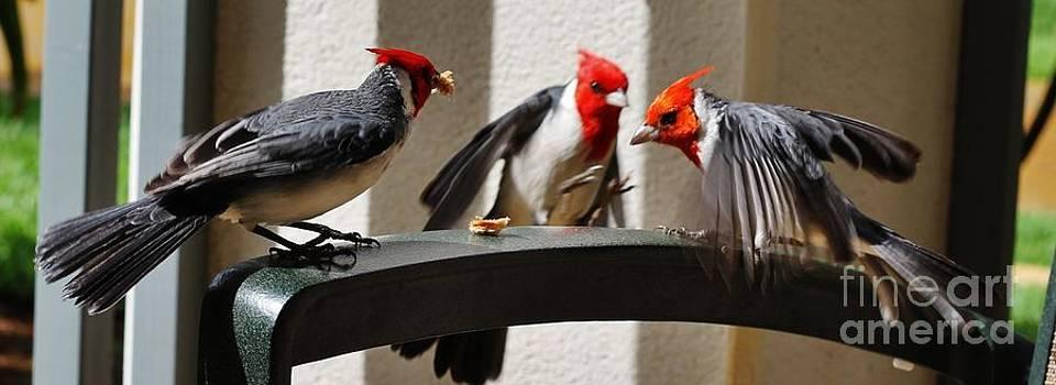 Butch Phillips - Triplet Cardinals