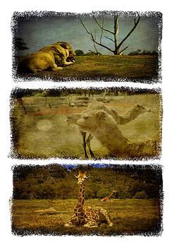 Shari Mattox - Triptych Wildlife