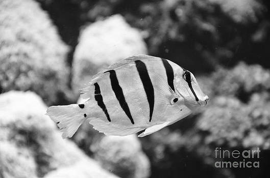 Tropical B and W by Matthew Lane