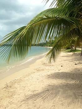 Tropical Beach by Felix Zapata