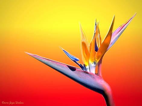 Joyce Dickens - Tropical Beauty