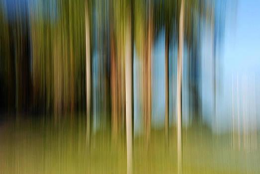 Tropical Brush by Lorenzo Cassina