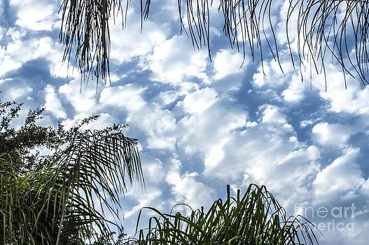 Tropical Cloudy Skies by Imani  Morales