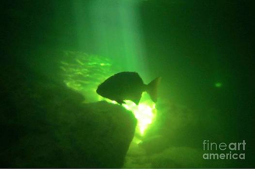 Halifax photography by John Malone - Tropical Fish Shilouette in a Cenote