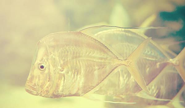 Jenny Rainbow - Tropical Fishes