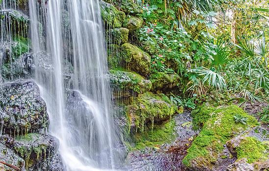 Judy Hall-Folde - Tropical Garden