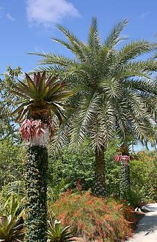 Kim Hojnacki - Tropical Garden