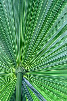 Carolyn Stagger Cokley - Tropical Leaf