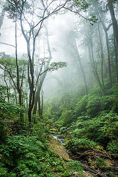 Tropical Rain Forest by Chaiyaphong Kitphaephaisan