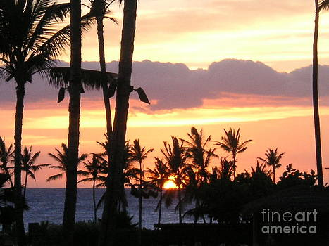 Tropical Sunset by Crystal Miller