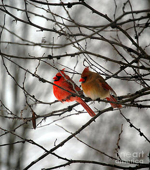 True Love Cardinal by Peggy  Franz
