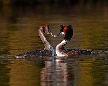 True Love by Paul Scoullar