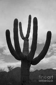 David Gordon - Tucson II BW