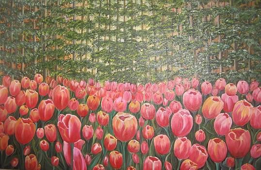Tulip Garden by Usha Rai