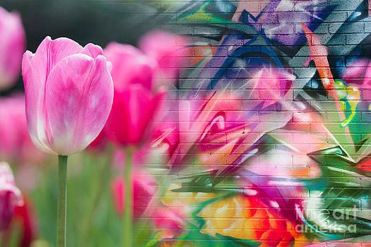 Sonja Quintero - Tulip Graffiti